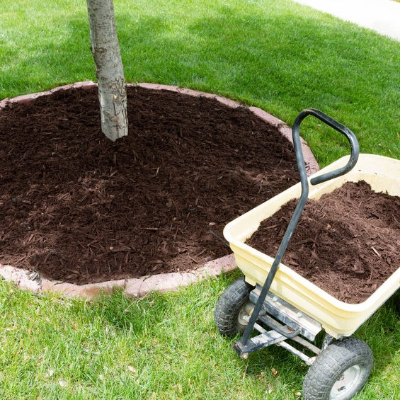 tree mulch and wheel barrow
