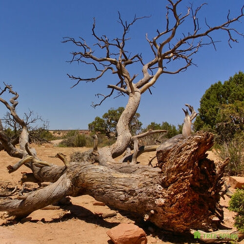 Fallen tree in the desert, Arches National Park, Utah, USA