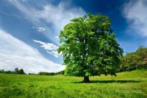 Healthy Tree