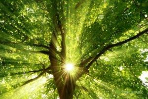 Tree Spark