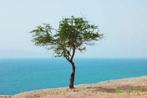 Tree Disease
