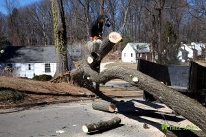 Tree Damage Removal