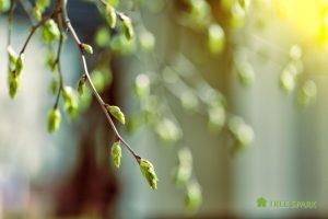 Spring Tree Maintenance