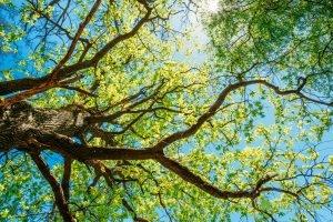 tree stress