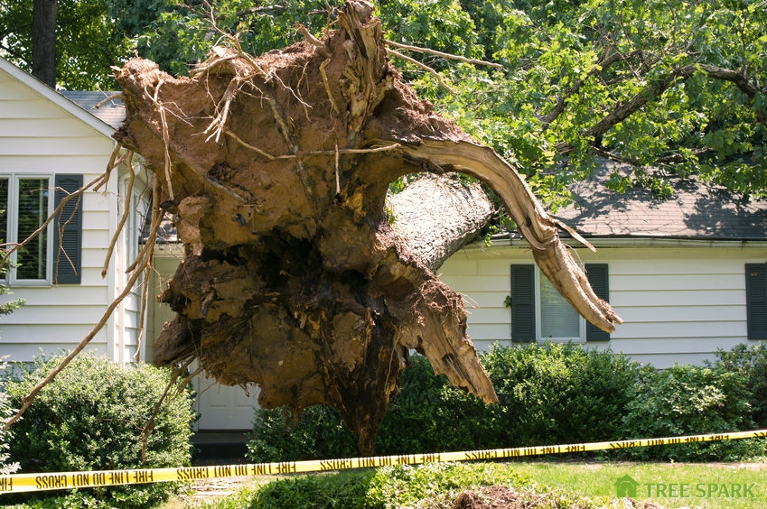 A Picture of a Tree That Fell On a House After a Severe Storm.