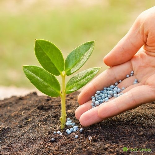 Hand giving pellet fertilizer to growing tree sprout.