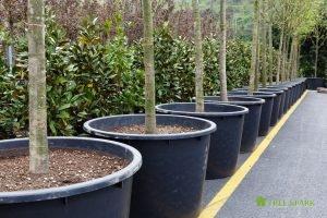 Expert Tree Planting