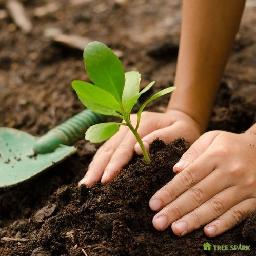 Close Up of a Kid's Hands Planting a Young Tree