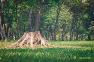 Tree Stump Removal Options to Consider